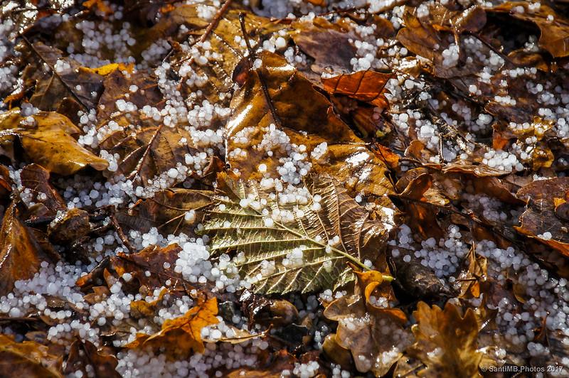 Granizo sobre hojas secas