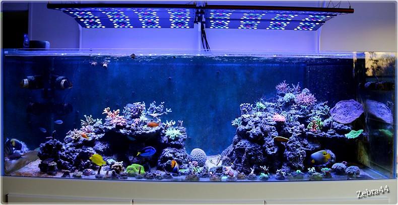 Mon nouveau bac r cifal 1200 litres for Bac a poisson 2000l