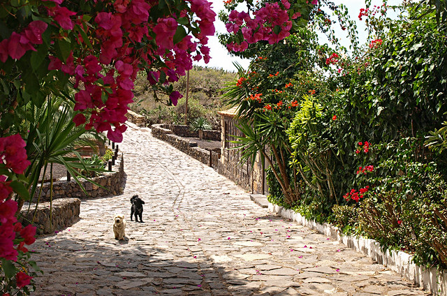 Merchats' trail, San Miguel de Abona, Tenerife