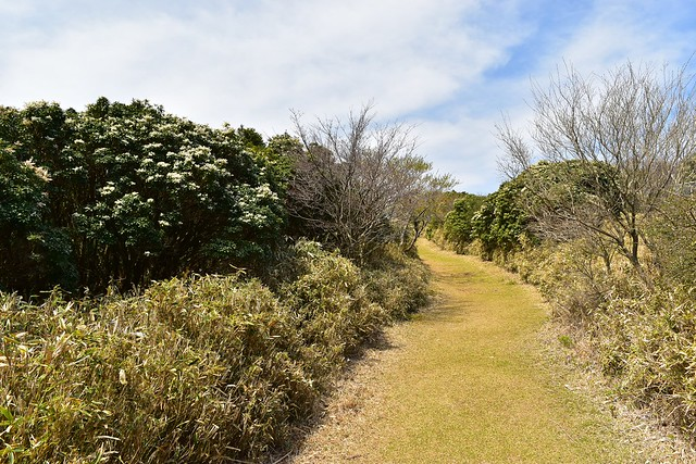 金冠山 芝生の登山道