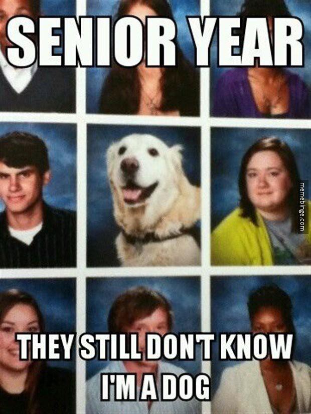Image Result For Best Friends Dog