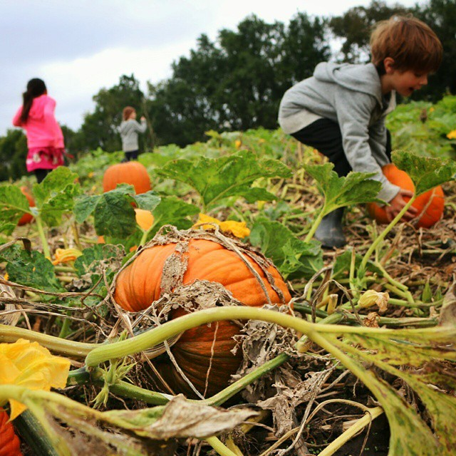 Pumpkin patch with friends in Kansas. #littleairstreamfriends
