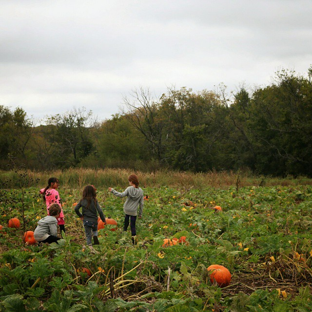 Pumpkin hunters. #littleairstreamfriends