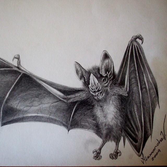 Estudo de 2009 verissimotattoo bat drawing graphite s for How to draw a small bat