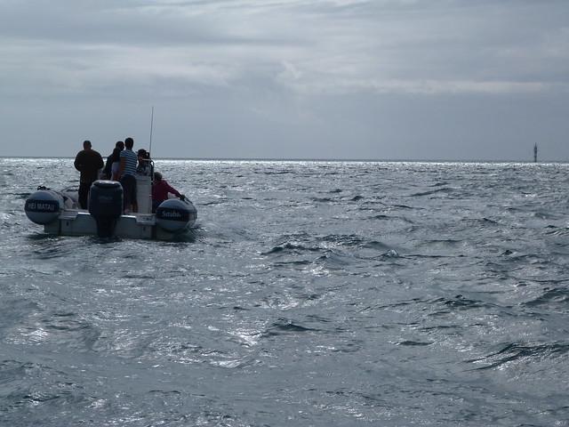 Barco para buscar delfines en Tróia (Alentejo)