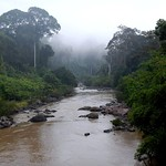 Mist in the morning, Danum Valley, Sabah, Borneo