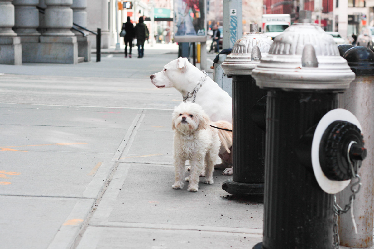 dogs-in-new-york