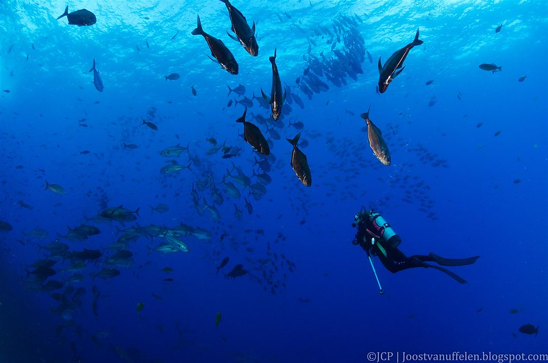 Isla Clarión buceo