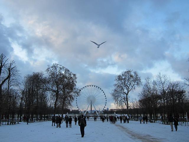 wheel and bird