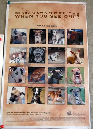 Dog Breed Test Kit Amazon