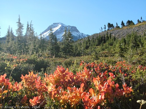 Rare view of fall foliage and Mt. Hood along the Timerline Trail, Oregon