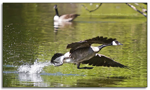 Walking on water...{} | by ImageInnovation Photography