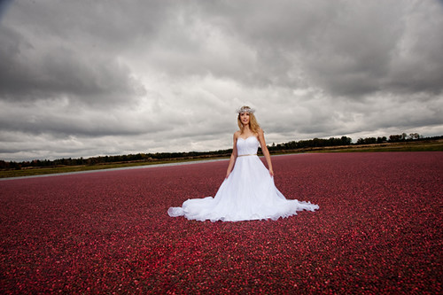wedding photos in cranberry marsh wisconsin | by beccadilley