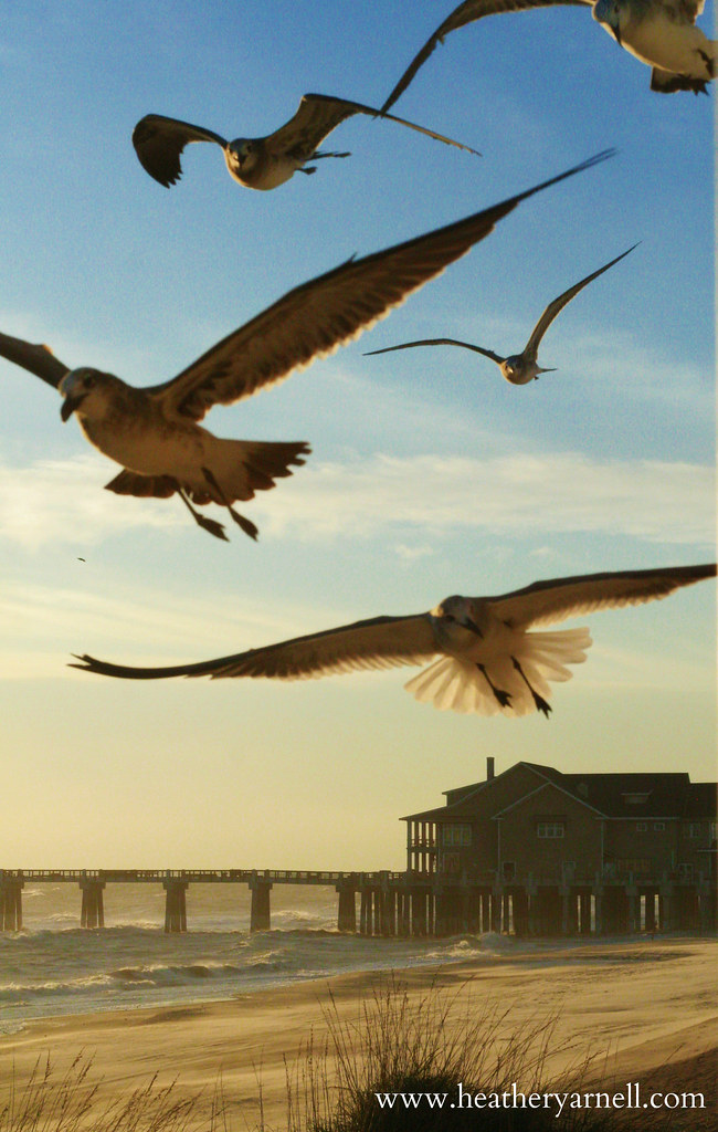 Seagulls Flying Over Pier