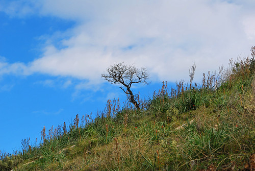 Lone Tree | by goingslowly