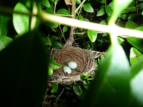 Wren S Nest Cafe Minyon