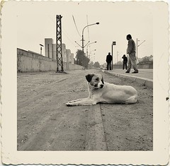 street dogs | by Peky28 ( Life Is Rich )