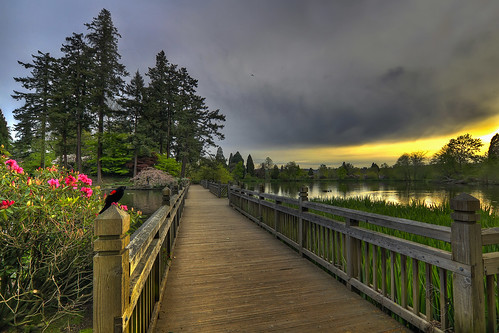 Bridge in Crystal Springs Rhododendron Garden at Sunset - HDR | by David Gn Photography