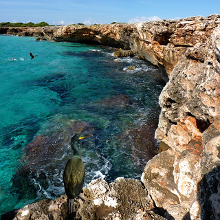 Green Cormorants nesting on the rocky coast of Menorca | by B℮n
