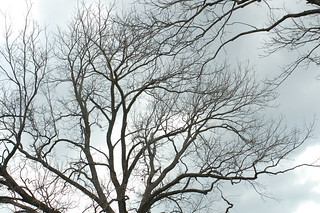 Peek at the Sky thru Winter Tree