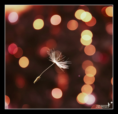 Flying without wings... | by achew *Bokehmon*