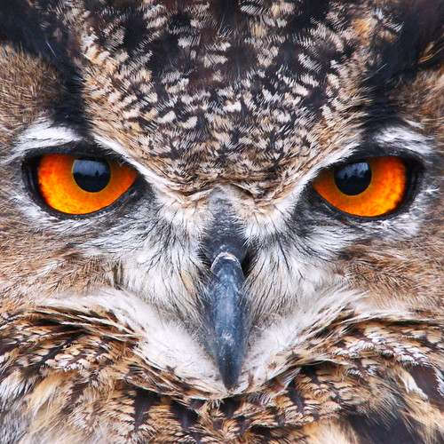 Eagle Owl | by Johan J.Ingles-Le Nobel