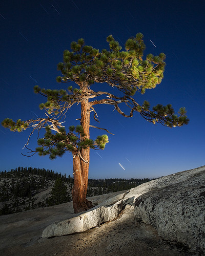 Tree from rock, Yosemite | by el.merritt