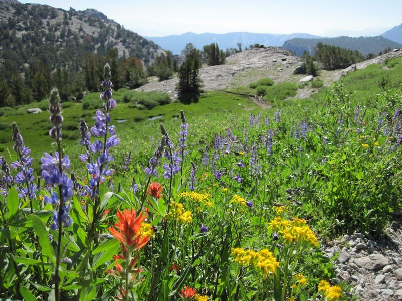 Midsummer flowers on the Gem Pass Trail