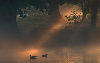 Early Morning Waterfowl | by Julian Barker