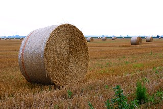 220/365 - Giant Shredded Wheat | by dcclark