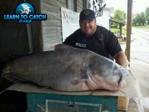 world record blue catfish 1 | New 130 Lb world record blue ...
