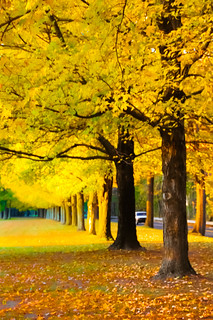 Yellow Autumn | by preetalina ° Preeti Desai