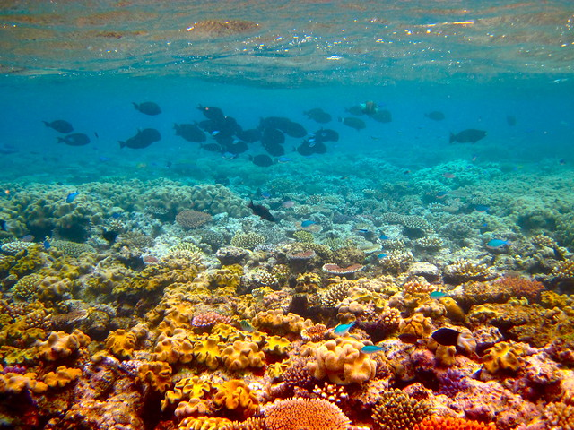 The Great Barrier Reef - 189