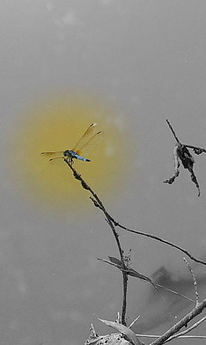 Dragon Fly | by nina8889