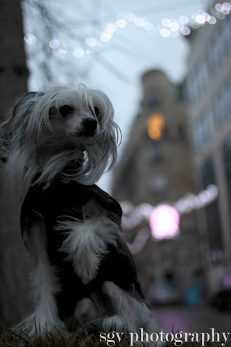 1/52 weeks of dogs strolling in Paris - City of lights | by sgv cats and dogs