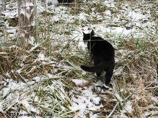 You Can't Fence In a Farm Cat | by Farmgirl Susan