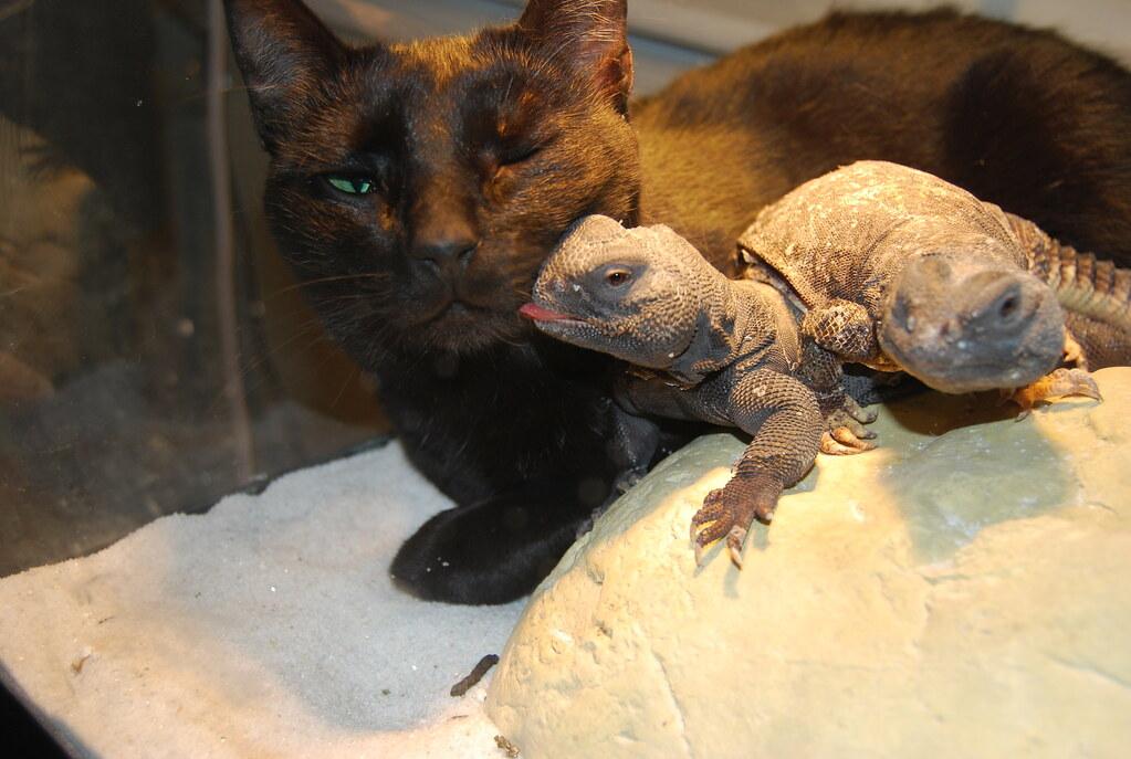 Lizard kissing the cat | Leah | Flickr