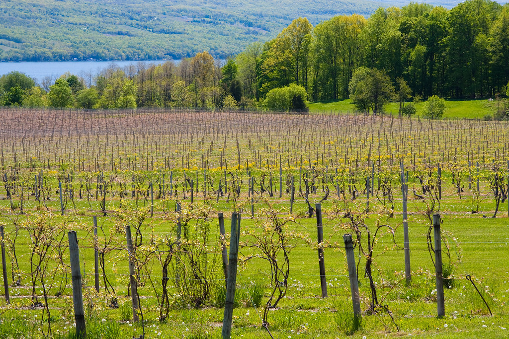 seneca lake wineries map with 5285329311 on Finger Lake Wine Country as well Finger Lakes Wine Tour Day Three additionally SelectRegion NY in addition Seneca Lake Wine Trail Celebrating 25 Years besides 1125968627586429.