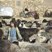 Sheperd and her flock