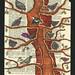 Nuncio to Oak