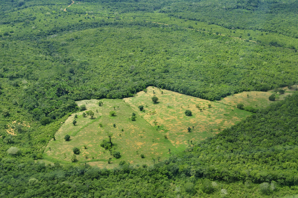 deforestation of the amazon rain forest The amazon rainforest is a moist broad leaf forest that covers nearly the entire amazon river basin which makes it can somehow manage to curb deforestation.