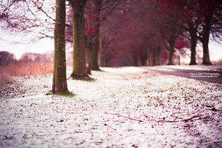 Autumn and Winter in 1 (explore) | by Olivia L'Estrange-Bell