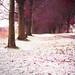 Autumn and Winter in 1 (explore)