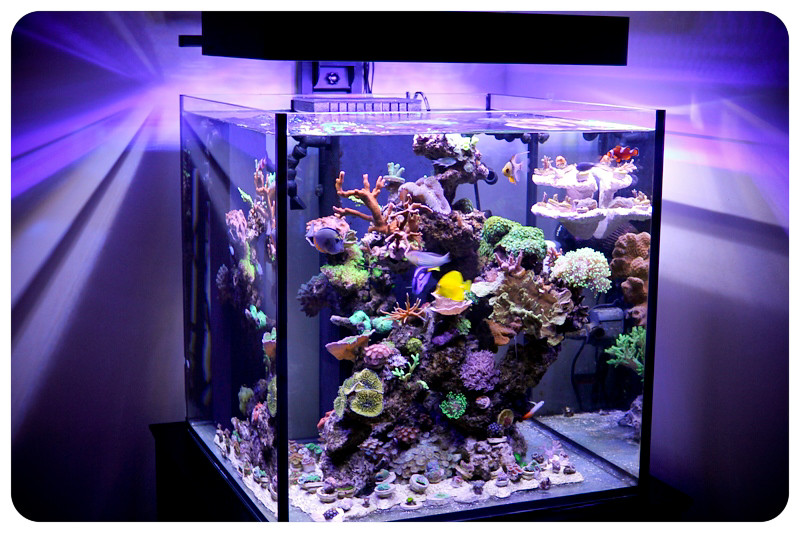 Rimless 60 gallon solana xl with panorama led lighting for Rimless fish tank