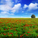 Remenbering spring / Recordando la primavera