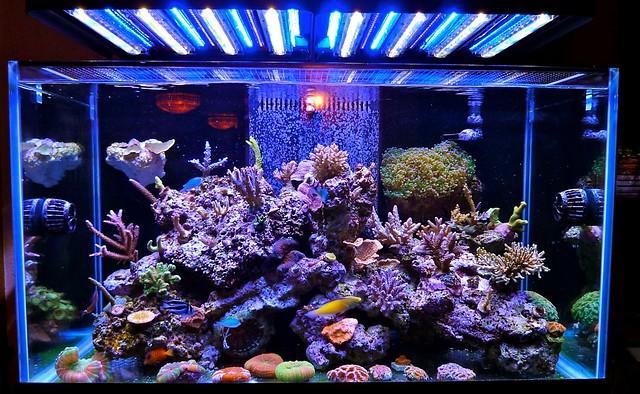 Stunning Marine Reef Aquarium With Ecoxotic Led Lighting