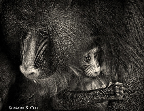 Mother's Love | by mctuba