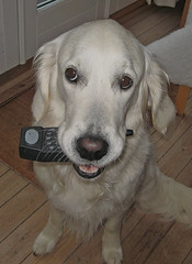 """Ditte with her """"doggie mobile phone""""!!"""
