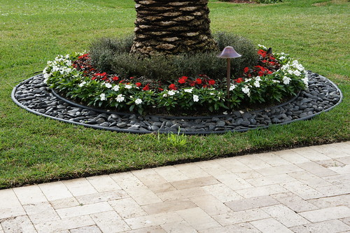 Flowers stones around palm tree jc enterprise services for Plants around trees landscaping
