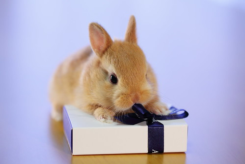 Bunny Opening a Gift | by ♥ Spice (^_^)